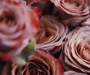 flowers, roses, and wallpapers image