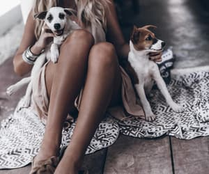 blogger, mikutas, and dogs image