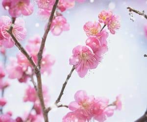 flower, instagram, and spring image