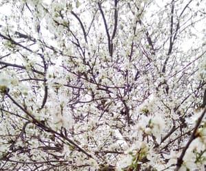 cherry tree, flowers, and magic image