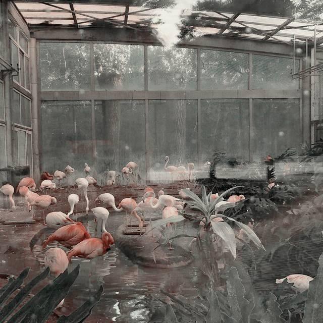 aesthetic, flamingo, and green image