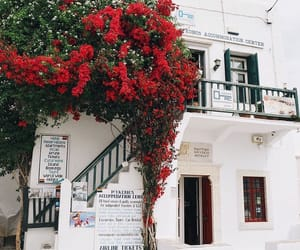 travel, flowers, and wanderlust image