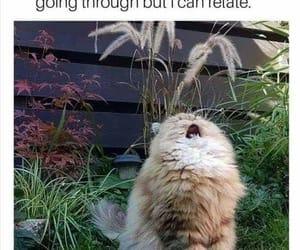 cat, me, and yep image