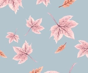 wallpaper, background, and autumn image