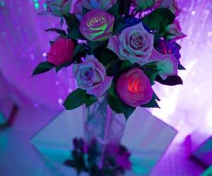 rose still life, led rose, and marina fini photography image