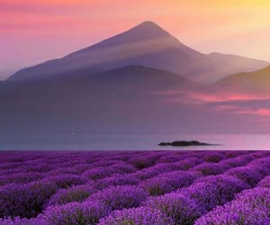 mountains, purple, and flowers image