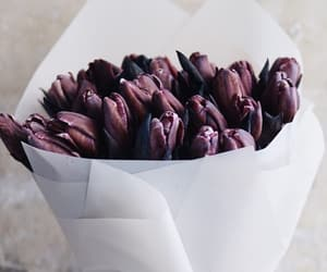 black tulips, flowers, and spring image