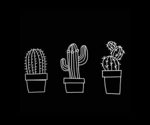 wallpaper, cactus, and black image