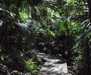 australia, boardwalk, and forest image