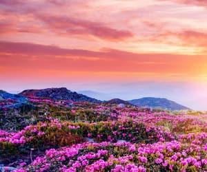 beautiful, flowers, and inspiring image