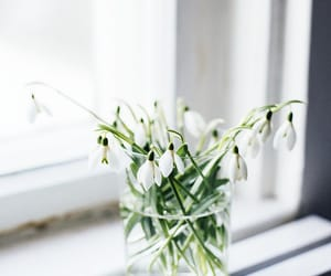flowers, snowdrop, and white image