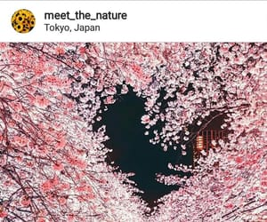 spring and natrure image