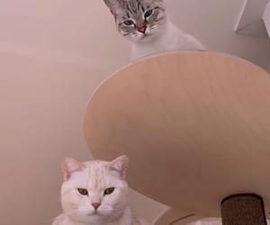 animals, cats, and Gatos image
