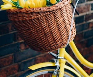yellow, flowers, and spring image