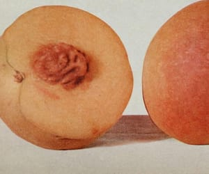 art, peach, and fruit image