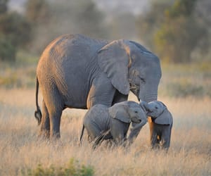 elephant, animals, and beautiful image
