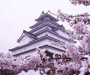 beauty, blossom, and castle image