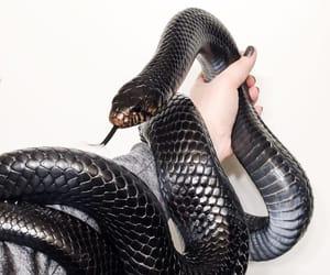 snake, aesthetic, and animal image