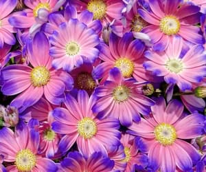 flora, flowers, and pink and purple image