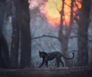 animal and wild image