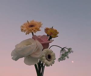 flowers, aesthetic, and sky image