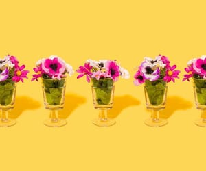 colors, flowers, and minimalism image