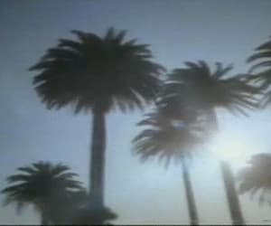 gif, palm trees, and vintage image