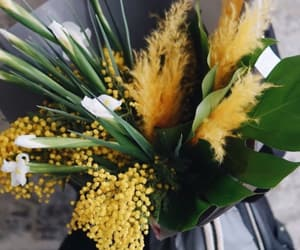 flowers, mimosa, and spring image