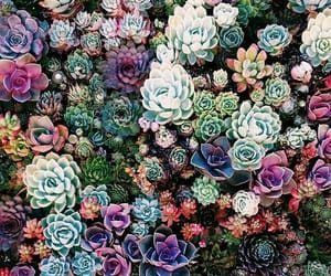 plants, succulents, and flowers image