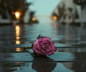 rain, flower, and rose image