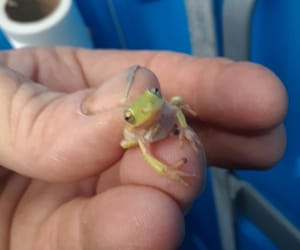 amphibian, pet, and pets image