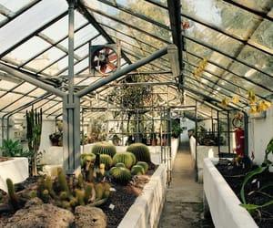 botanical garden, cactus, and photography image