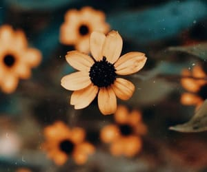 flowers, photography, and spring image