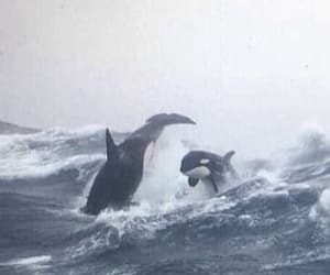 ocean, waves, and killer whales image