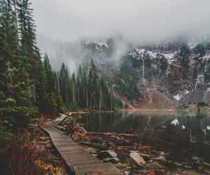 forest, green, and mountains image