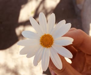 flower and cute image