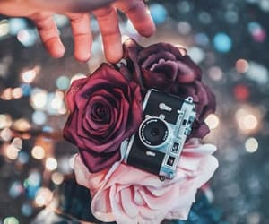 rose, flowers, and photography image