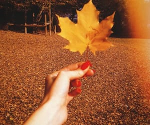 aesthetic and leaves image