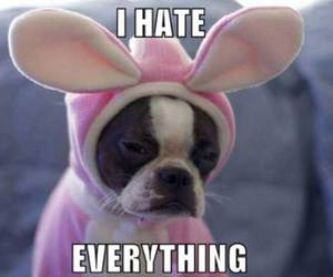 dog, funny, and hate image