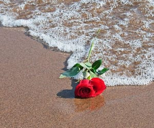 beach, red rose, and sea image