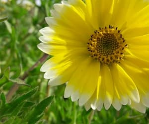 flower, nature, and sunshine image