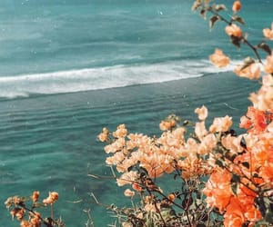 flowers, aesthetic, and beach image