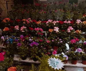 buy, flower, and puesto image