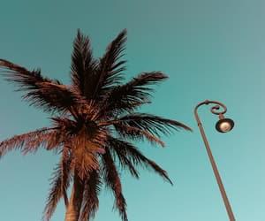 beauty, palm, and veracruz image