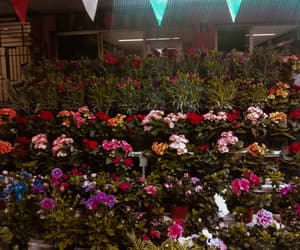 flores, night, and flower image