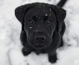 cute puppy, beautiful black, and black puppy image