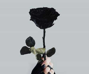 black, black beauty, and black rose image
