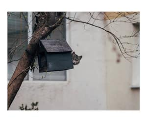 uh oh, bird house, and bird feeder image
