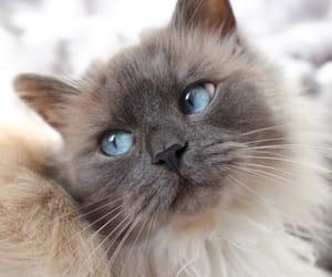 beautiful, blueeyes, and eyes image