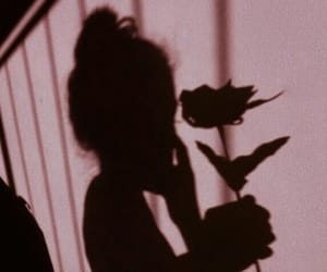 rose, shadow, and pink image